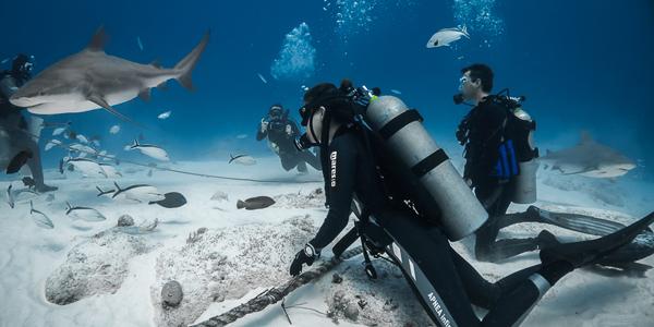 'De cerca', el documental en el que verás a Laura Madrueño entre tiburones